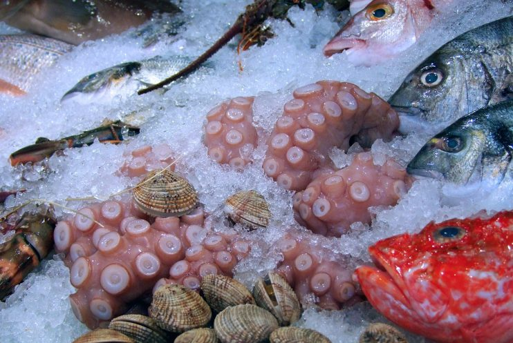 vis calamares beleving