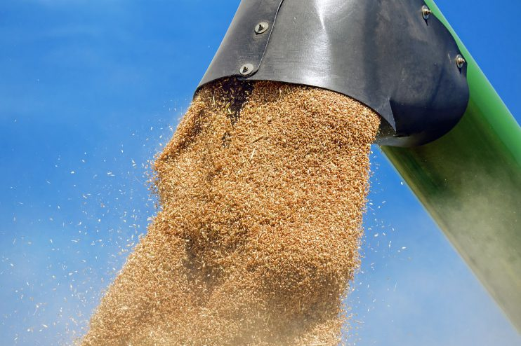 graan oogst volkoren