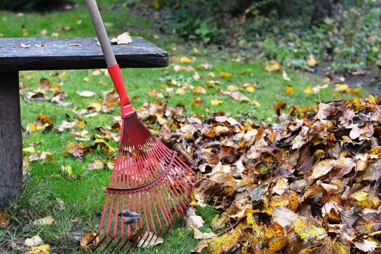 hark bladeren herfst tuinieren
