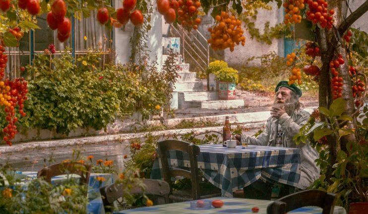 tomaten volkstuinen man