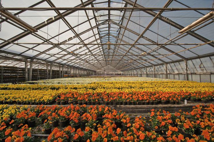 kassen tuinbouw kwekerij bloemen