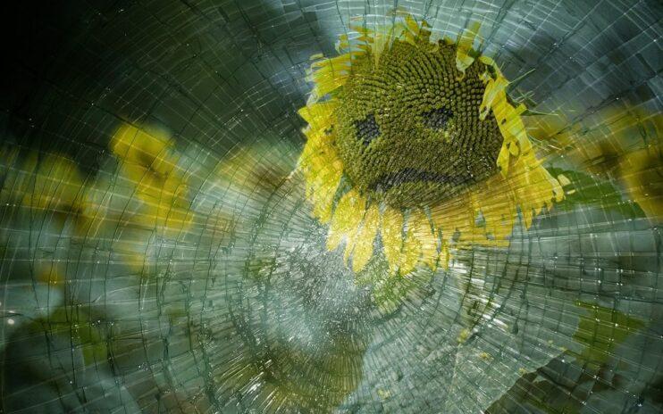 teleurgesteld jesse klaver groenlinks zonnebloem gebroken glas